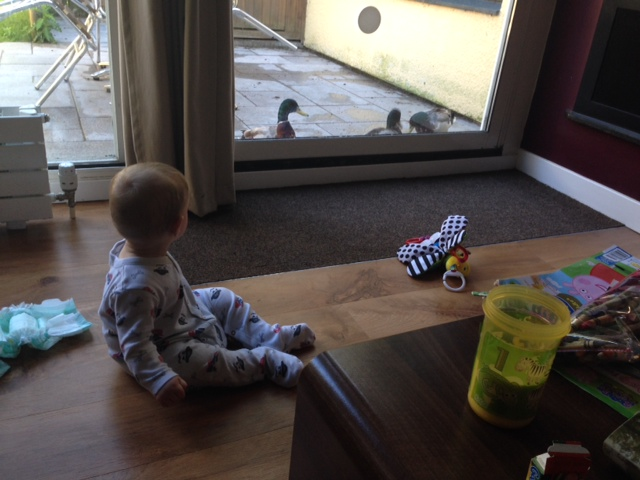 Watching the ducks on the patio