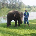 Angsana Baby Elephant