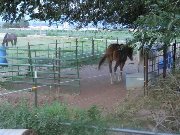 Dona Ana - Horse Farm - Shrink