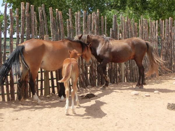 Tamaya - Horse Sanctuary - Shrink
