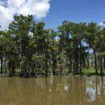 Louisiana - Swamp tour 2