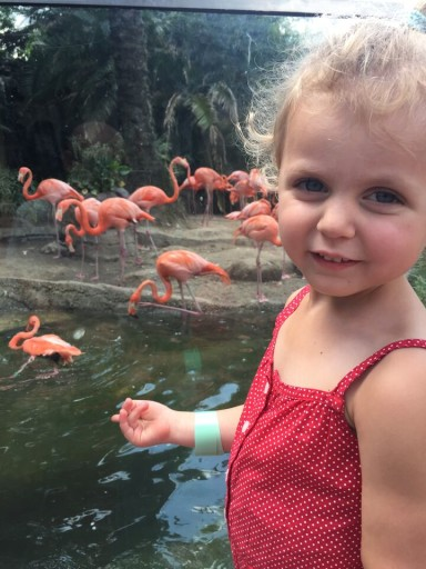 New Orleans - Audobon Zoo