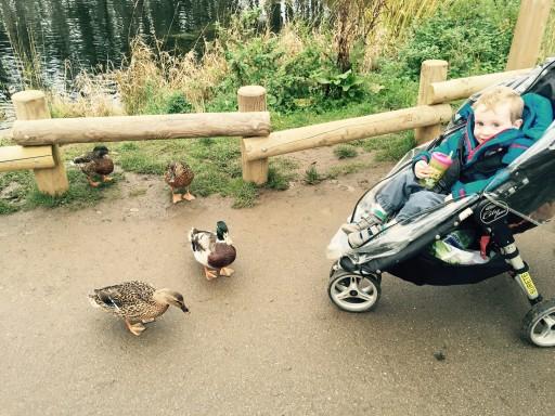 Center Parcs Woburn - ducks